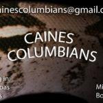 Rosario Designs Caines Business Card